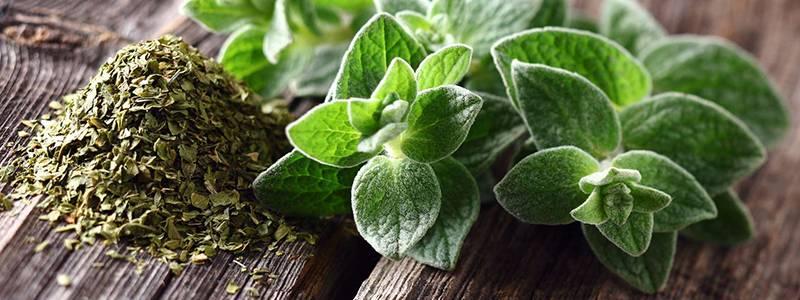 Lien vers présentation de l'aromathérapie et de ses bienfaits