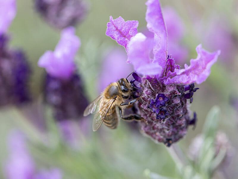 Aroma'O le blog spécialisé en aromathérapie et huiles essentielles - version mobile