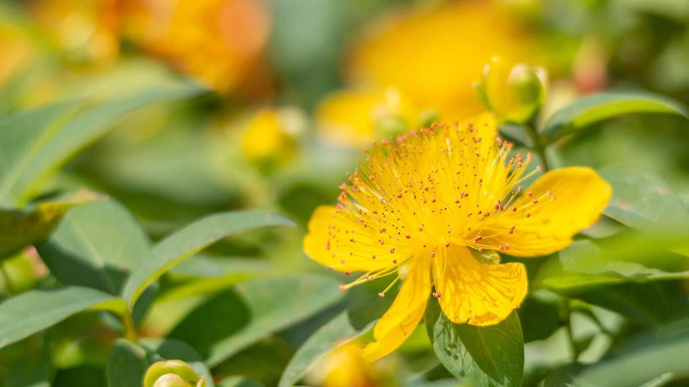 aromatherapie-huiles-végétales-anti-inflammatoires-aromao